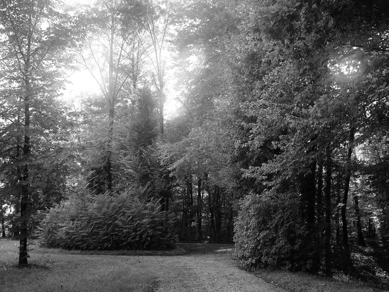 bosco terrachini sentiero