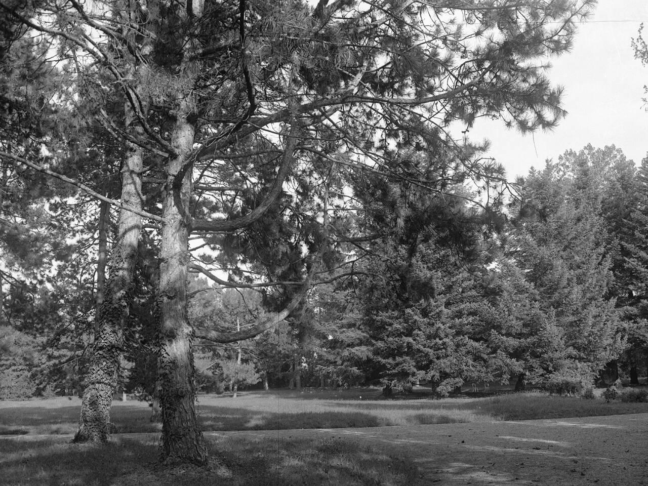 bosco terrachini